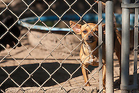 The scene of a raid on a puppy mill in Johnston, SC on Tuesday, Sept. 11, 2012. HSUS workers found over 200 dogs, nine horses and 30-40 fowl.