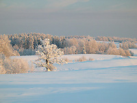 Winter Landscape with Snowy Trees, Valga County, Estonia