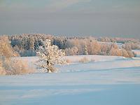 Winter Landscape with Snowy Trees, Valga County, Estonia