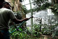 Tropical Rainforest Glasshouse (formerly Le Jardin d'Hiver or Winter Gardens), 1936, René Berger, Jardin des Plantes, Museum National d'Histoire Naturelle, Paris, France. Detail of Rudolf Guillaume, gardener, watering the Tropical plants in the Art Deco style Glasshouse.