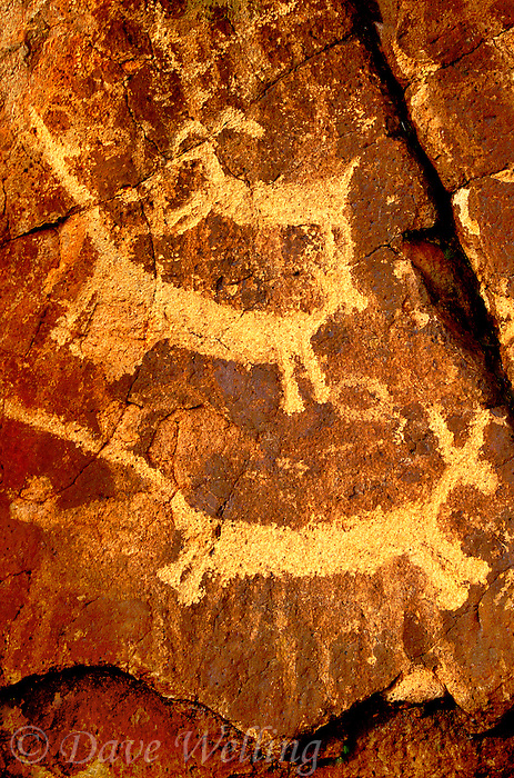 711053042 indian petroglyphs or rock art carved into reddish-colored rocks in little petroglyph canyon on the china lake naval air station near ridgecrest california