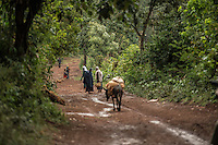 Coffee farmers carry their harvested cherries to a washing facility in Shegole, in the region of Limu, Ethiopia.