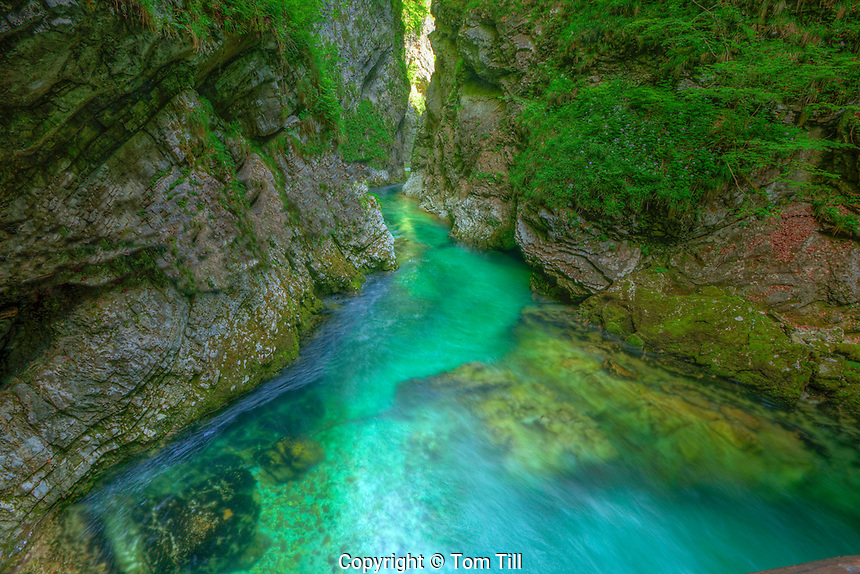 Vintgar Gorge,  Triglav National Park, Slovenia,  Narrow gorge with blue-green glacial waters, Near Bled, Julian Alps