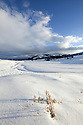 WA00424-00...WYOMING - Lamar Valley during winter in Yellowstone National Park.