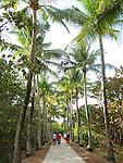 Palm-tree lined path, Miami, Florida