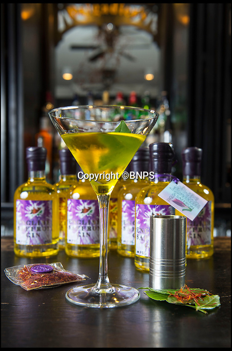 BNPS.co.uk (01202 558833)<br /> Pic: PhilYeomans/BNPS<br /> <br /> New British tipple invented - just in time for summer.<br /> <br /> Intrepid British farmer David Smale is expanding his unusual empire in exotic saffron - by launching a luxury gin infused with the precious spice.<br /> <br /> David was among the first to reintroduce saffron to England's fields for the first time in 200 years when he started farming it a stone's throw of Saffron Walden in what was the heartland of British  production in Tudor times.<br /> <br /> Over the years local growers died out completely as the painstaking harvesting methods became too expensive to compete with cheap saffron imported from remote Iran and Kashmir.<br /> <br /> But plucky David has bucked the trend to revive the centuries-old tradition - and his burgeoning business is taking off so quickly that he is branching out into the drinks market.
