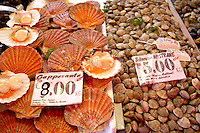 Fresh Shell fish - clams, scallops - Chioggia - Venice Italy