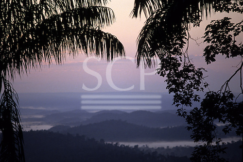 Amazon, Para State, Brazil. Stunning early morning view over misty rainforest at dawn with palm tree in silhouette.