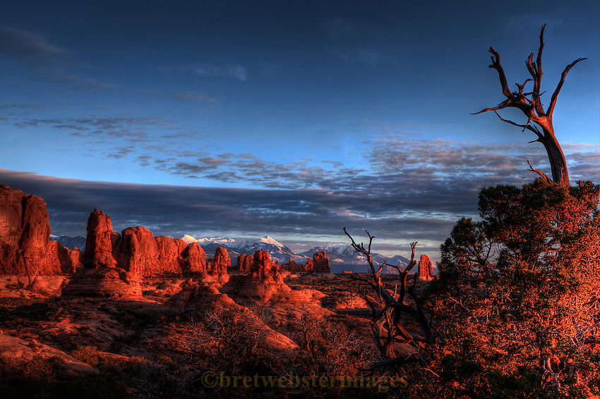A classic view of Arches National Park with the La Sal Mountains behind overseen by a lonely juniper tree.