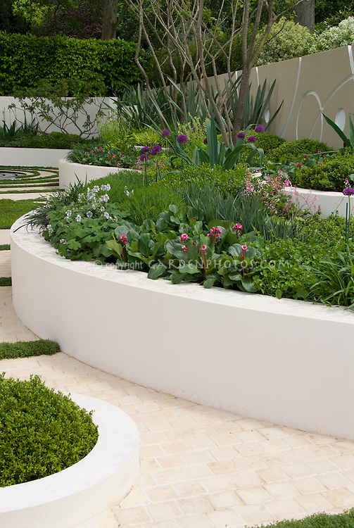 Cement Raised Flower Beds : White wall and raised curving beds plant flower stock