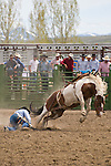 A saddle bronc rider is left in the dirt as his mount bucks away at the Jordan Valley Big Loop Rodeo, Ore.