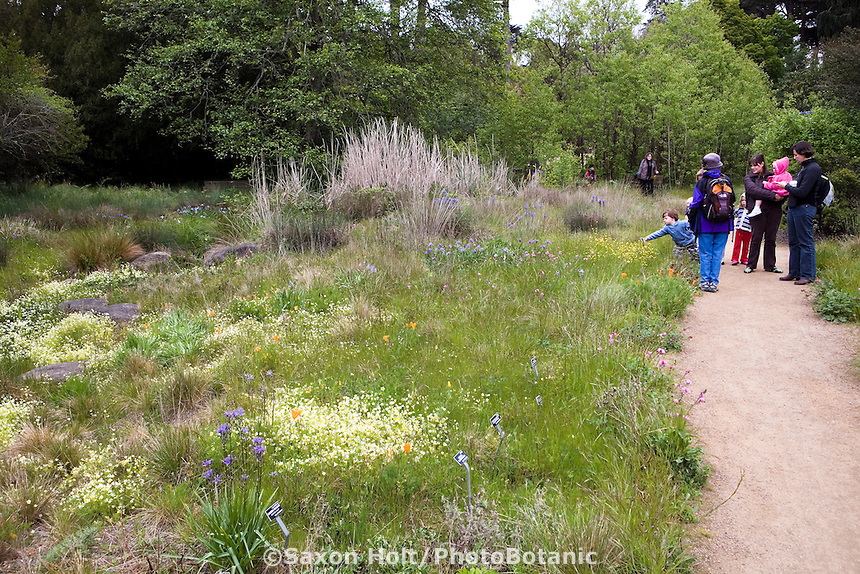 Visitors along path enjoying Menzies California native plant garden