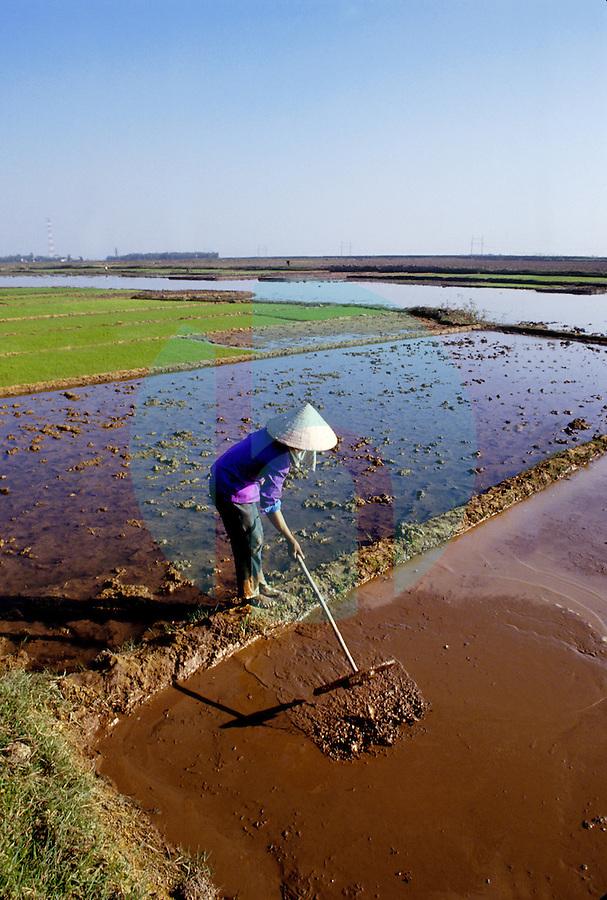 December 6th 1993-PHI LA, NORTHERN VIETNAM-A woman prepares rice paddies for planting in Northern VietnamÕs Phi La.  Photo by Daniel J. Groshong/Tayo Photo Group