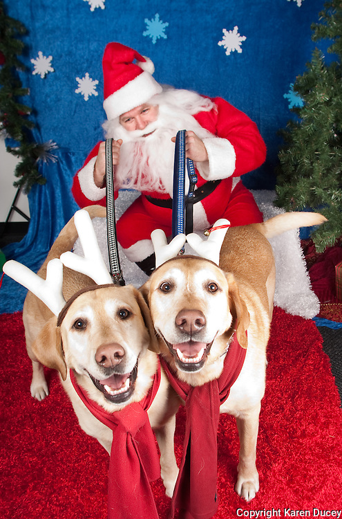 Dogs are photographed with Santa at a fundraiser for Dogs Deserve Better at Pet Pros in Redmond, WA on December 12, 2010. (photo by Karen Ducey)jack and Blu are photographed with Santa at a fundraiser for Dogs Deserve Better at Pet Pros in Redmond, WA on December 12, 2010. (photo by Karen Ducey)