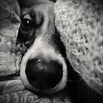Close up portrait of a dog face