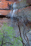 Waterfall near the Virgin River, Zion National Park, Utah, USA