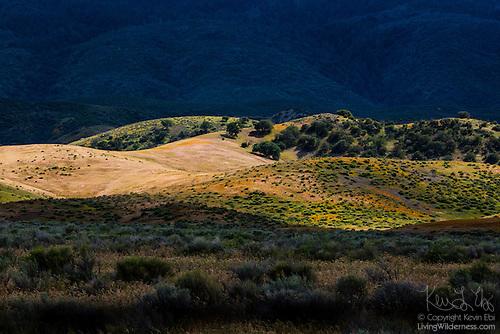 Rolling Hills, Antelope Valley, California