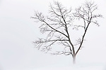 A strong wind blows fine powder snow passed a solitary tree on the slopes of Grand Hirafu resort in the Niseko ski region of Hokkaido, Japan on Feb. 9 2010. Winds from Siberia howl across the Sea of Japan, bringing in some 15 meters of powdery snow to Niseko each year.