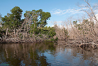 Flamingo Park, Florida Everglades National Park, Mangroves, Fallen Trees<br />