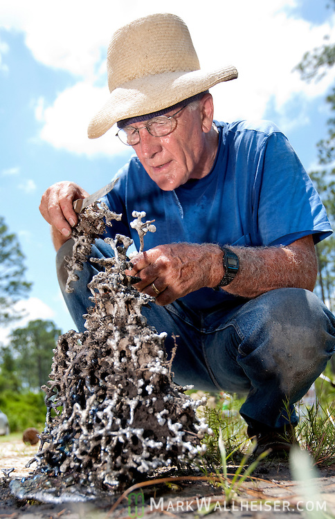Retired Florida State University professor Walter Tschinkel searches the Apalachicola forest to find a good fire ant mound to pour his hot molten aluminum into before letting it cool and digging up a unique piece of art.