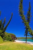La baie des tortues et ses fameux pins colonnaires, Bourail, Nouvelle-Calédonie