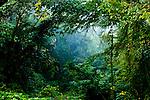 A foggy morning in the lush, green woods of Arkadelphia, Arkansas.