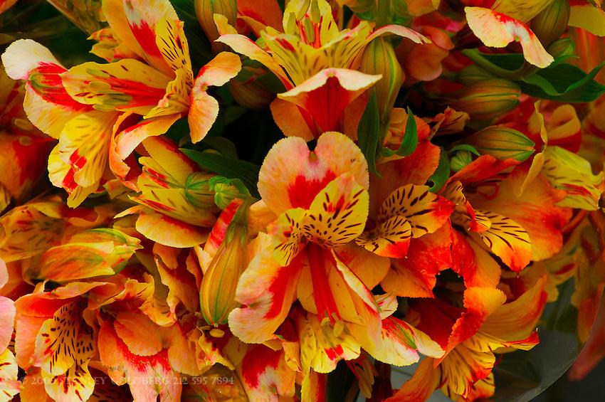 Orange, Yellow, Green Flower Bouquet, Union Square Market