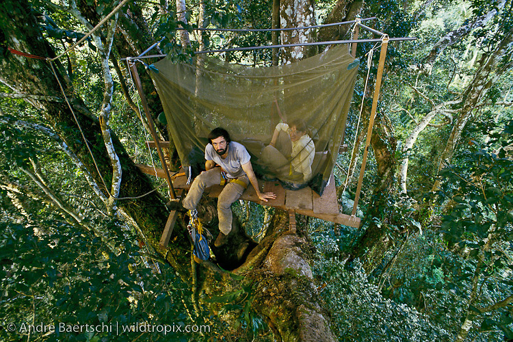 Ornithologists Paul Donahue and Teresa Wood on observation platform high up in the rainforest canopy, lowland tropical rainforest, Manu National Park, Madre de Dios, Peru.