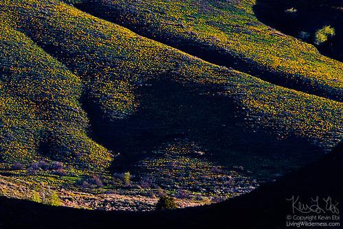 First Light on Balsamroot, Fawn Peak, Washington