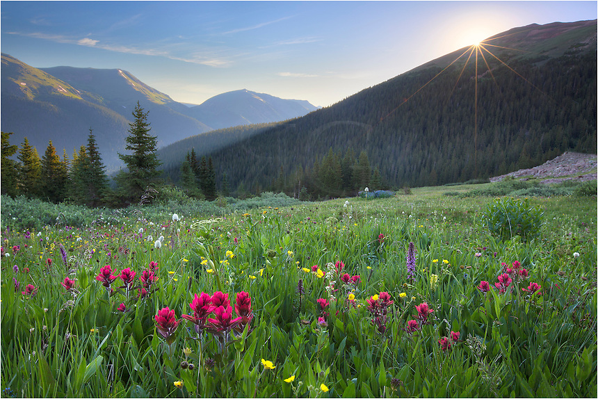 The alarm went off at 3:30am. I rolled out of bed and drove over to one of my favorite not-so-well known locations to shoot images of Colorado Wildflowers - one that offers a great landscape in the background - Butler Gulch. <br /> <br /> Butler Gulch is about a 2.3 mile hike, gaining nearly 1000 vertical feet in the process. The payoff is often fields of wildflowers such as paintbrush, daisies, and pink elephants, in a meadown surrounding by mountains on all sides. On the Rocky slopes there are colorful columbine. A few stream crossings can be a bit sketchy in the dark (it is usually dark when I am hiking up). But if you go slow and take your time, no worries.