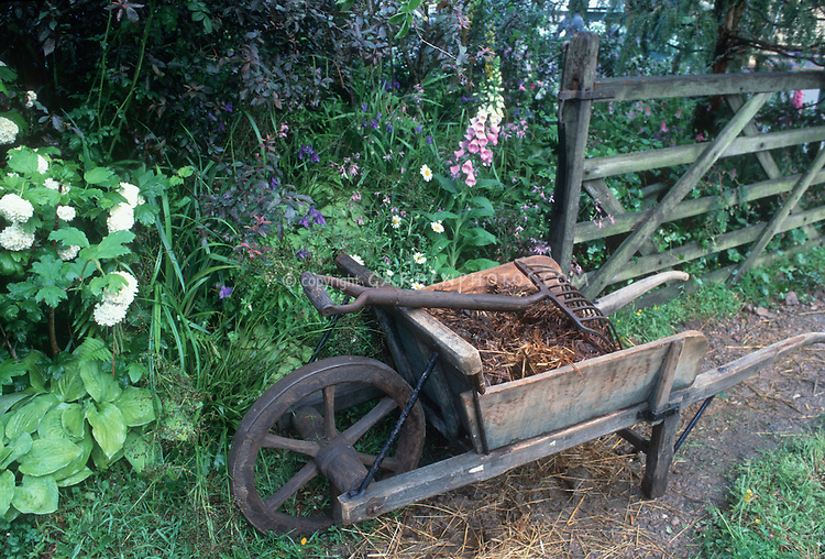 Charming wooden old wheelbarrow with straw compost, old garden fork tool implement, wooden gate fence, foxglove, flowers, plants, in small farm setting