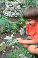 Child boy feeling softness of lambsears (Stachys) leaves plant in the garden, in summer with shorts, smiling and happy (Caucasian)