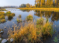 Grand Teton National Park, WY<br /> Fog and fall colors on a beaver pond at Schwabacher Landing on the Snake River