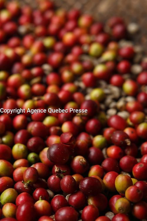 Doi Inthanon National Park<br /> , coffee beans