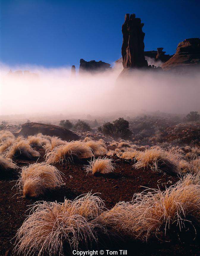 Iced Grasses & Fog, Arches National Park, Utah   Rare fog in Park Avenue
