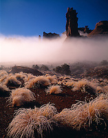 Iced Grasses & Fog, Arches National Park, Utah   Rare fog in Park Avenue
