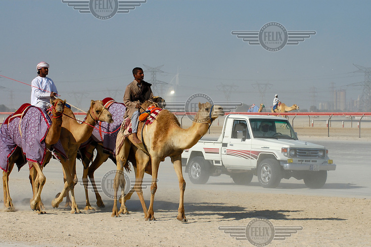 Camel trainer (in vehicle) and camels heading for a racing training session, with light shining off the Burj Dubai luxury hotel in the distance behind.