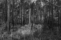 Julington Durbin Preserve