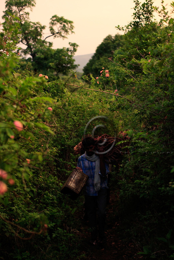 The group of honey hunters is progressing through the thick jungle carrying all the equipment. The only means of transportation for honey is portage. For the young generation, distance from a drivable road determines the duration of the hunt and quantity of honey harvested.