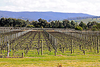 N A Ebden photo Winery Yarra Valley Melbourne grape vines high country landscape
