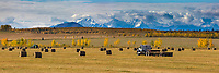 Panorama of large round bales of straw in an agriculture field, Alaska Range mountains in the distance, Delta Junction, Alaska.