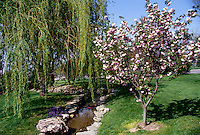 Landscaped green space with small fish pool, blooming magnolia and willow tree in spring