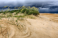 Approaching storm over sand dune and sea oats on a Cape Hatteras beach.
