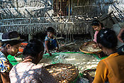 A young boy sits with a group of women cleaning the dried shrimps as part of the post harvest activity in the fisheries in Damin Naung village in Pyapon district of Myanmar.