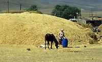TURCHIA: Anatolia Orientale, sulla strada verso il sito archeologico di ANI antica capitale armena. .TURKEY: Eastern Anatolia, on the road to  the archaelogical site of ANI ancient Armenian capital. .