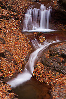 A watercourse cascades down a mountainside of fallen leaves, Nagano Prefecture, Japan.