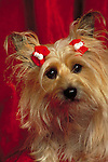 silky terrier Shopping cart has 3 Tabs:<br />