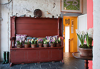 Potted hyacinths are displayed on an Irish table settle, which can be either a seat or a table