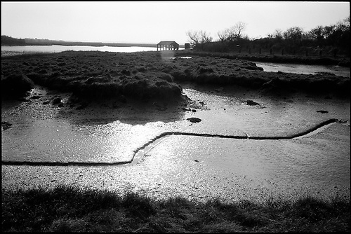 Mud Lines, Alresford Creek by Paul Cooklin