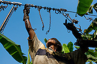 A young Colombian worker preparing the aircable for banana transport on the banana plantation in Aracataca, Colombia, 14 March 2006. Eighty percent of the exported bananas in the world are grown in Latin America. Local farms have no other alternative than to sell for a price offered by the multinational company. When working conditions and ecology is in question, the corporations do not have any responsibility as they do not own plantations. Local governments in the attempt of organizing banana export provide low duty taxes on export, they try to eliminate social and enviromental politics to attract the big companies to their countries.